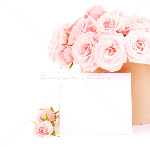 Stock photo: Pot of pink roses