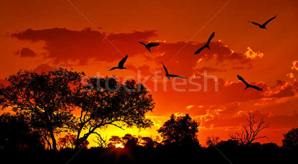 Stock photo: Landscape of Africa with warm sunset