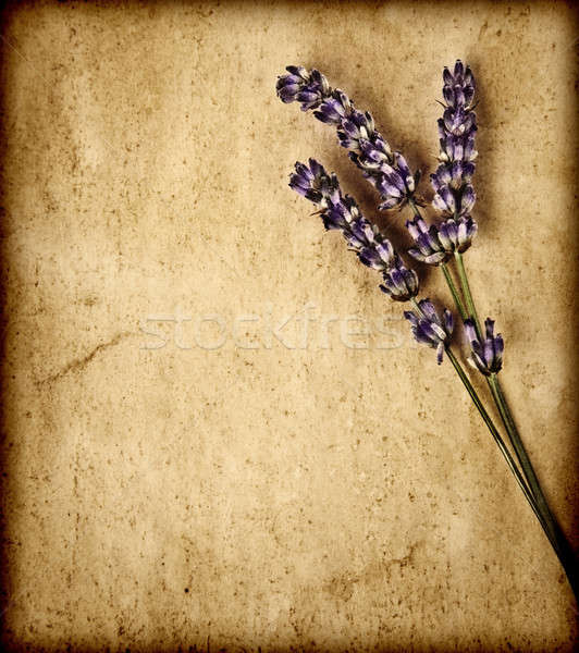 Stock photo: Lavender flowers isolated on brown textured background