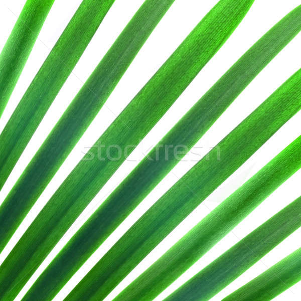 Stock photo: natural pattern from green palm leaves isolated on white