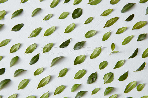 Stock photo: Composition of green leaves
