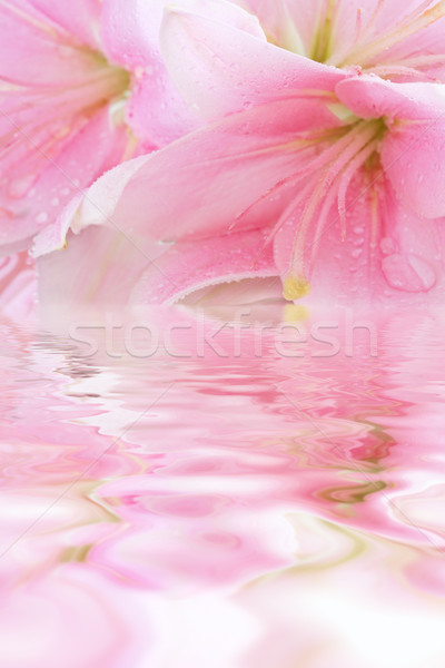 Stock photo: Floral background