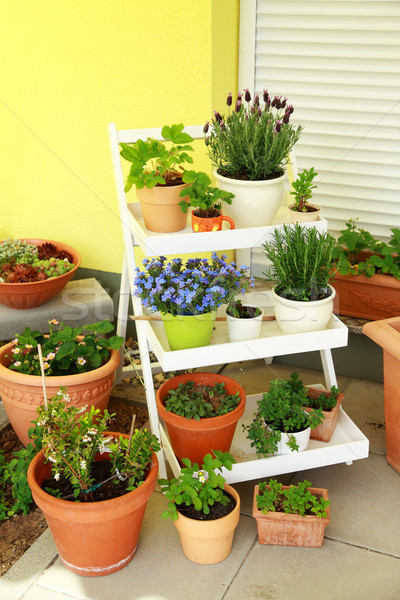 Stock photo: Small roof garten