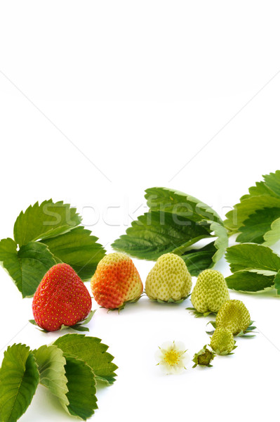 Stock photo: Strawberry growth isolated on white