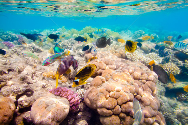 Stock photo: Tropical Coral Reef. Red sea