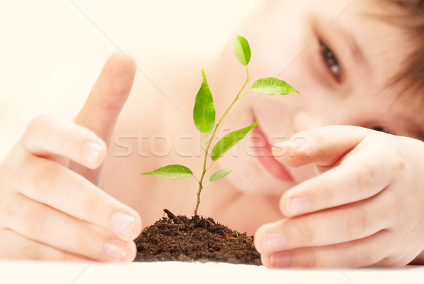 Stock photo: The boy observes cultivation of a young plant.