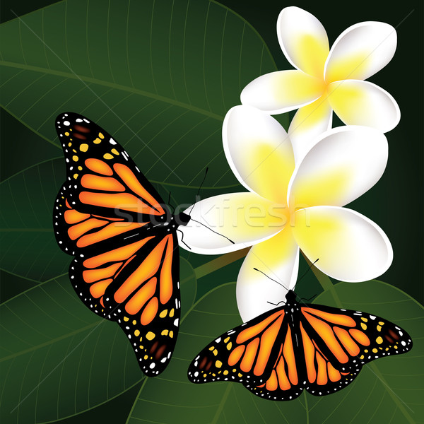 Stock photo: vector frangipani and butterflies