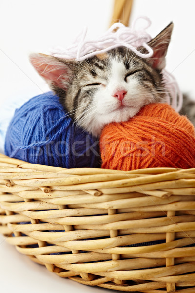 Stock photo: cat playing with yarn