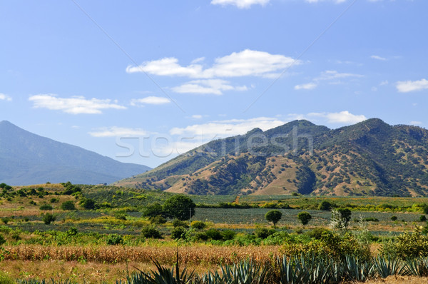 Stock photo: Landscape in Jalisco,  Mexico