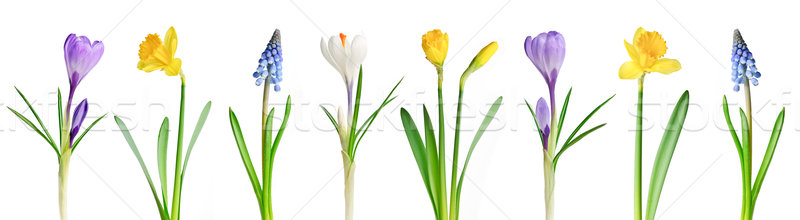 Stock photo: Spring flowers in a row