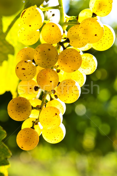 Stock photo: Yellow grapes