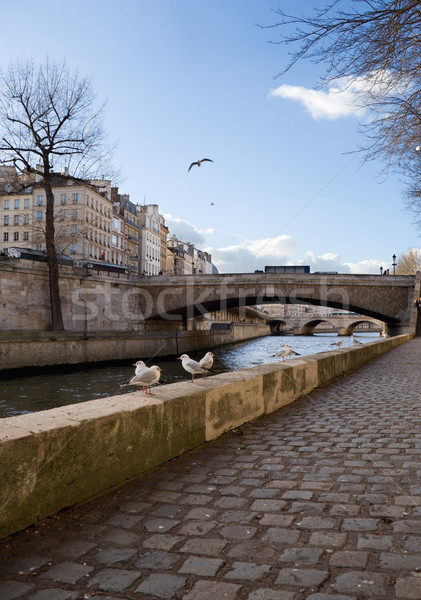 Stock photo: Gulls in Paris