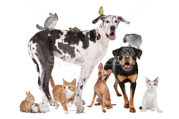 Stock photo: Pets in front of a white background
