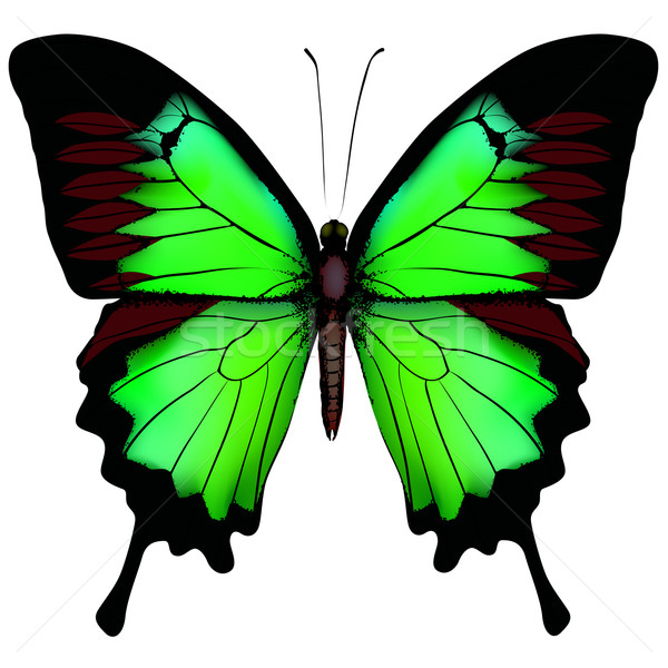 Stock photo: Vector illustration of beautiful green butterfly  isolated on wh