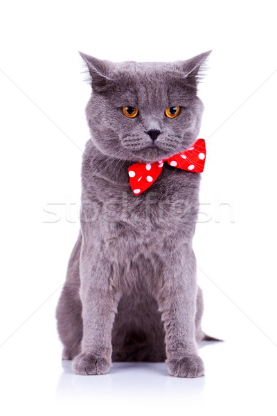 Stock photo: cat wearing a red bow tie