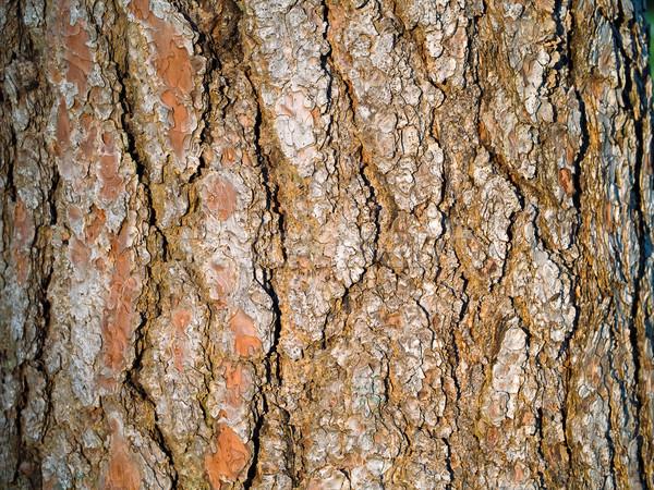 evergreen tree bark background - photo #3