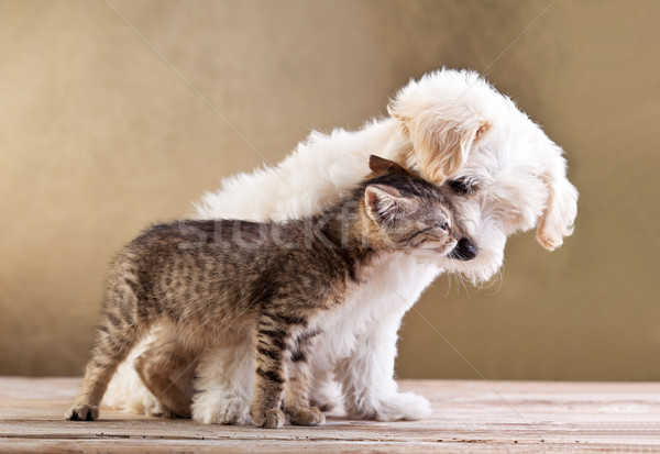 Friends - small dog and cat together