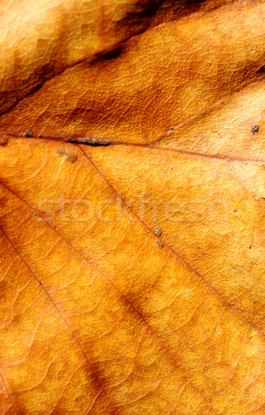 Close up of a dry leaf in nature
