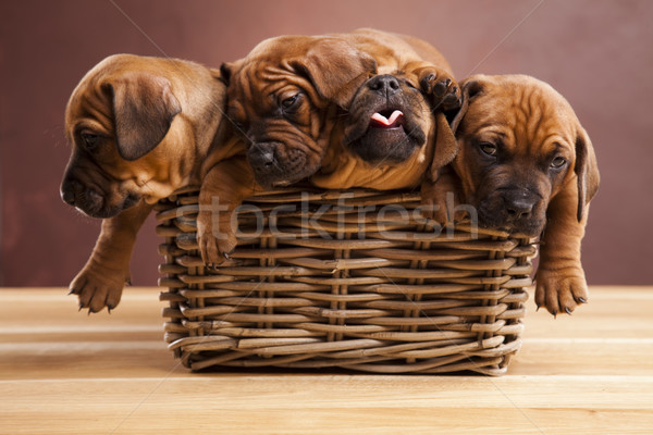 Stock photo: Puppies, wicker basket