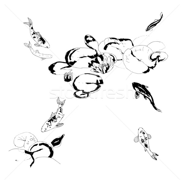 Stock photo Koi fish under lotus flowers black and white