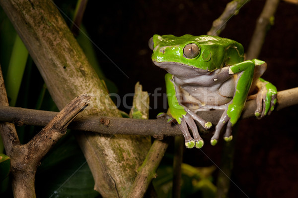 Stock photo: frog on branch in tropical jungle