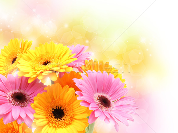 Stock photo: Gerbera daisies on pastel sparkly background