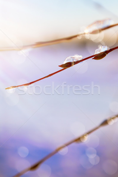 Stock photo: Abstract art spring background with thawing snow in the spring o