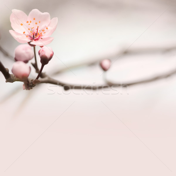 Stock photo: Spring header with copy space.