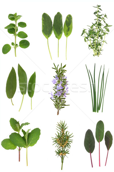 Stock photo: Medicinal and Culinary Herb Leaves