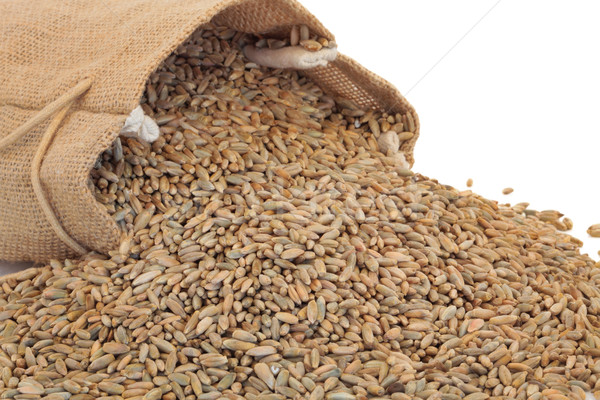 Stock photo: Rye Grain