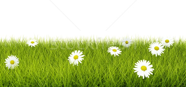 Stock photo: Grass with flowers