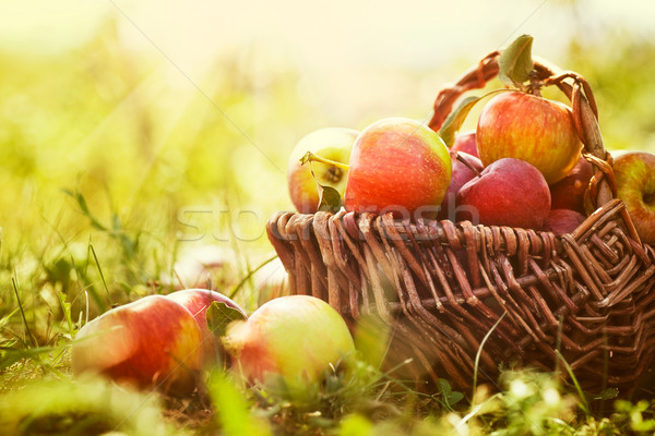 Stock photo: Organic apples in summer grass
