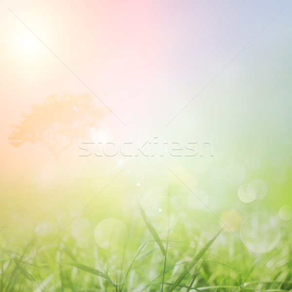 Stock photo: Spring or summer nature sunset background