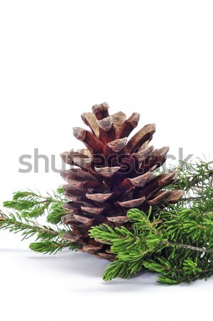 close up of pine cone on a white background