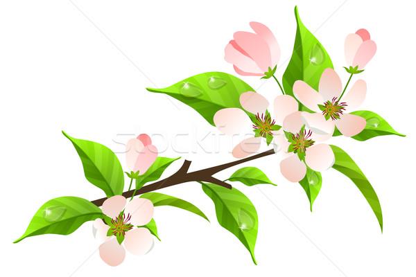 Apple tree bloom wide wallpaper free wallpapersdownload hd picture