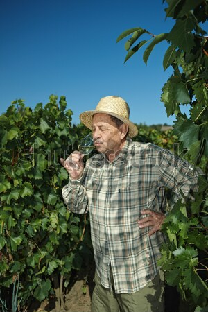 Stock photo: Senior vintner working in vinery