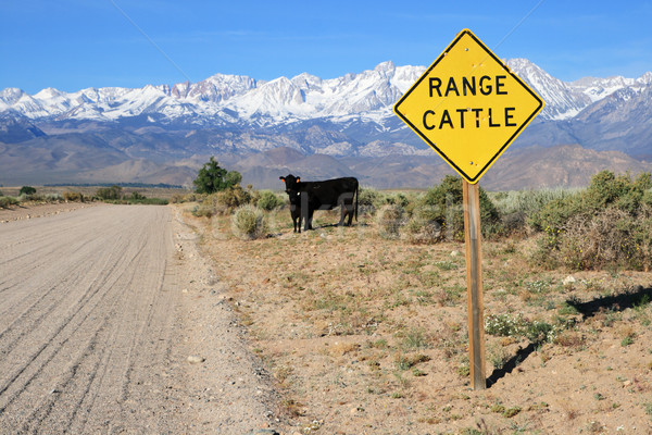 Stock photo: cattle range sign on road