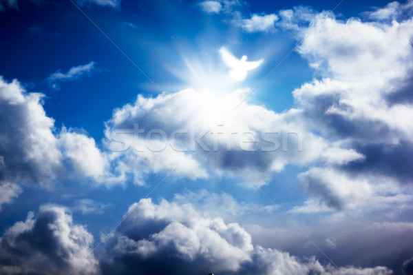 Stock photo: White dove in heavenly sky
