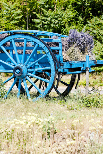 Stock photo: cart with lavenders, Provence, France