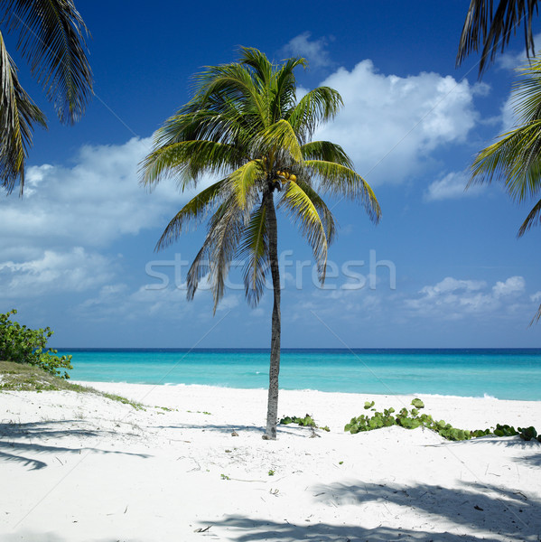 Stock photo: Varadero, Matanzas Province, Cuba