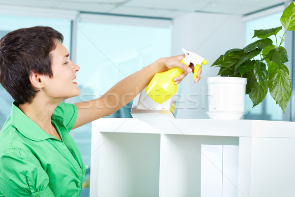 Stock photo: Spraying plant
