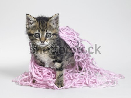 Stock photo: kitten and pink wool