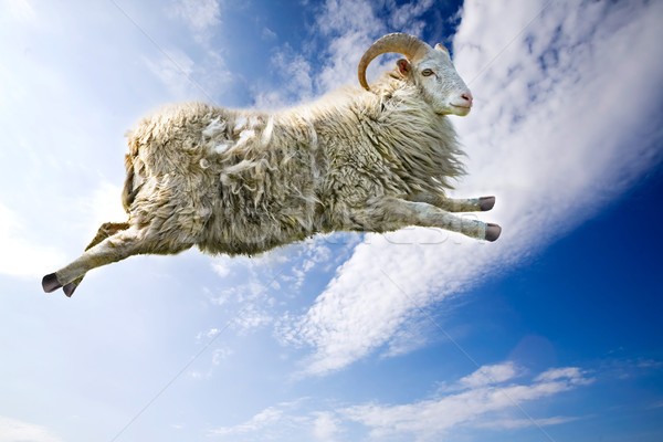 Stock photo: Flying Sheep