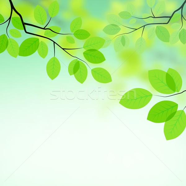 Background Images on Stock Photo   Fresh Leaves Background  Vector Illustration     James