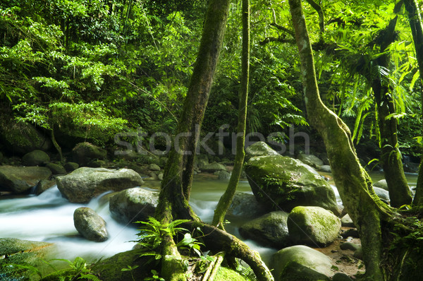 Stock photo: Green forest and stream