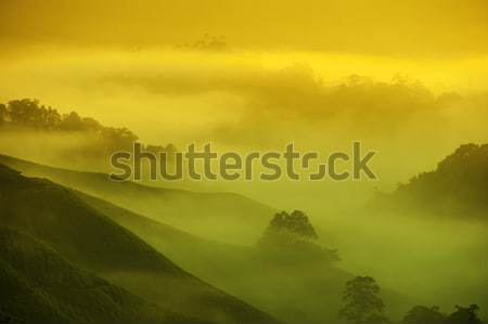 Stock photo: Tea Plantations.