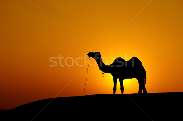Stock photo: Desert landscape