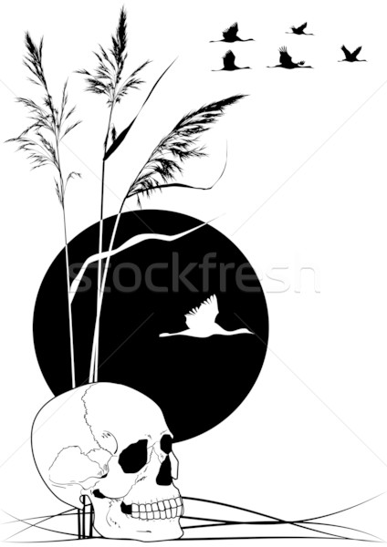 Stock photo: skull, cranes and reed