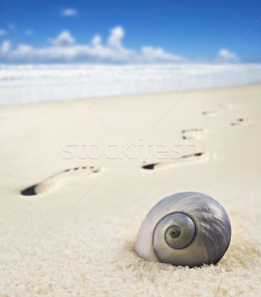 Stock photo: Sea shell and foot prints on a sandy beach