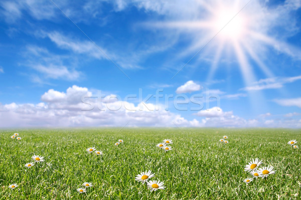 Stock photo: Serene Sunny Field Meadow in Spring